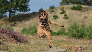 Psi by mohli pomoci s bojem proti koronaviru.