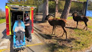 Mufloni neměli roušky, nepřehází humor záchranáře z pražské Krče