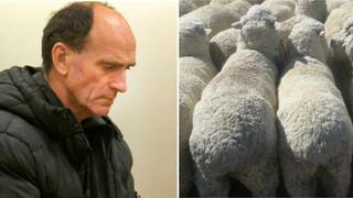 Znásilňovat ovcí