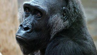 Pražská zoo vpustí jen 8500 lidí denně.