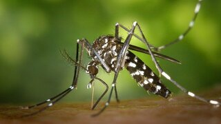 Komáři mohou přenášet nebezpečná onemocnění.