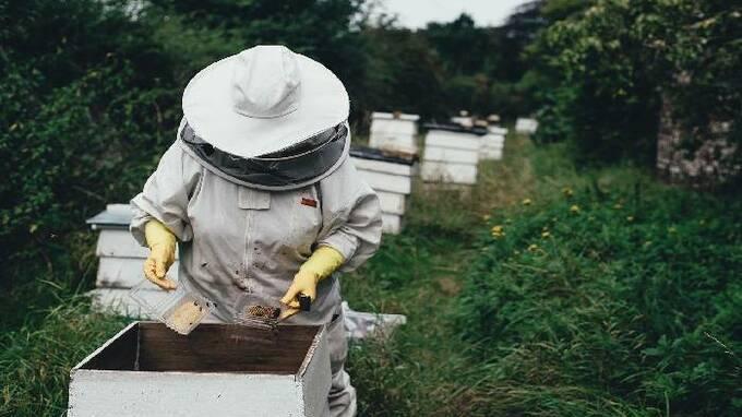 Pětina včel nepřežila letošní zimu.