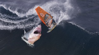 Žralok zaútočil na surfaře