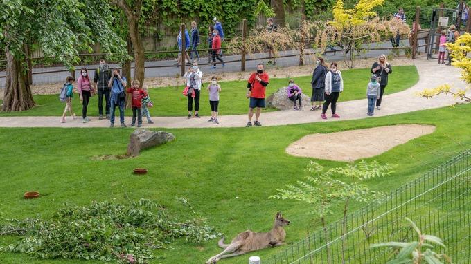 Pro pražskou zoo je rozvolněná kapacita stále nedostačující.