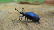 Některé nebezpečné druhy hmyzu se etablují v Česku.