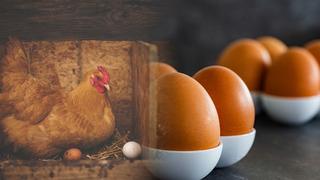 O vejcích většinou víme pouze to, jak je připravit, ale existuje i řada rekordů.