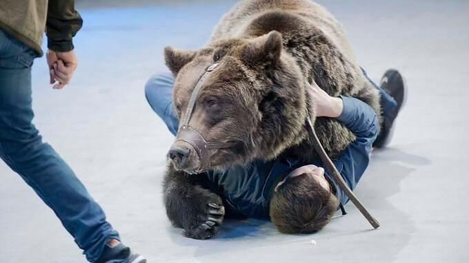 Medvěd zaútočil na ošetřovatele, kterého rozsápal v kleci