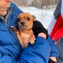 Loyal toy terrier 'guards her dead owner for three days in minus 30C cold' in Siberia