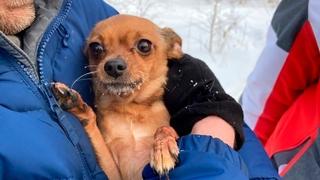 Fenka Nyusya přežila v mrazech -30 stupňů Celsia tři dlouhé dny