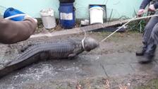 Hasiče při likvidaci požáru překvapil krokodýl