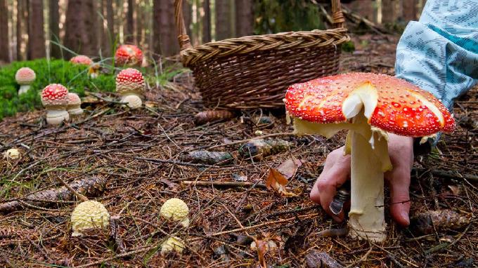 Některé houby v českých lesích mohou způsobit velké zdravotní potíže