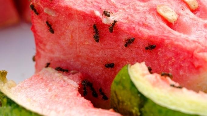 Mravenci – Ilustrační snímek