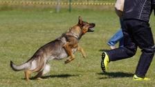 Útok psa – ilustrační snímek