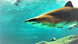 Žralok – Ilustrační snímek