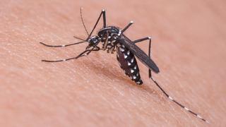 Komár – ilustrační snímek