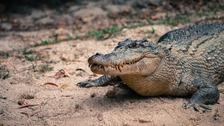 Krokodýl – ilustrační snímek
