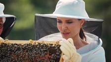 Americká herečka Angelina Jolie zachraňuje včely